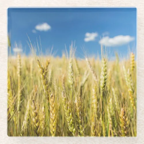 Kansas Wheat Glass Coaster