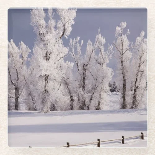 Frost Covered Trees and Fence, Colorado Glass Coaster