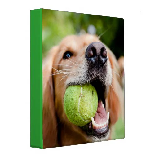 Golden Retriever With Tennis Ball 3 Ring Binder