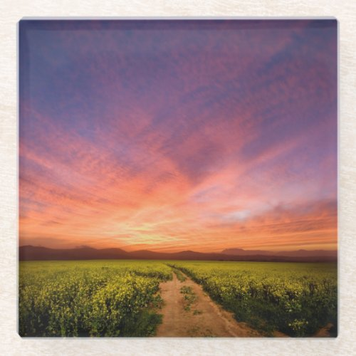 Brilliant Sunset Over Farmland Glass Coaster